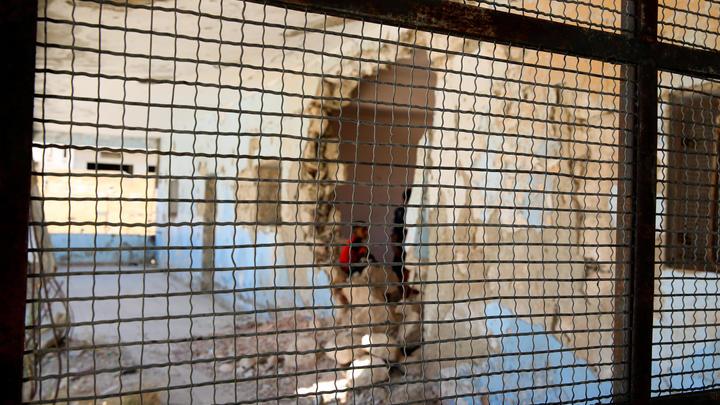 В Сирии нашли заброшенную лабораторию террористов: Обнаруженное внутри поразило военных