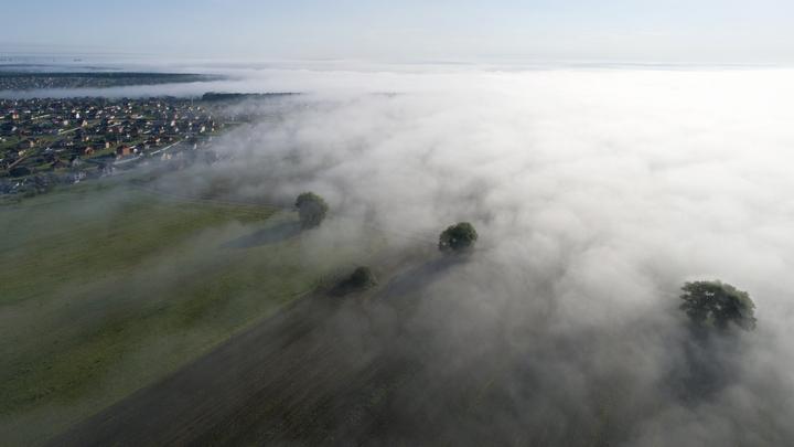 МЧС предупреждает: утром на дорогах Подмосковья будет туман