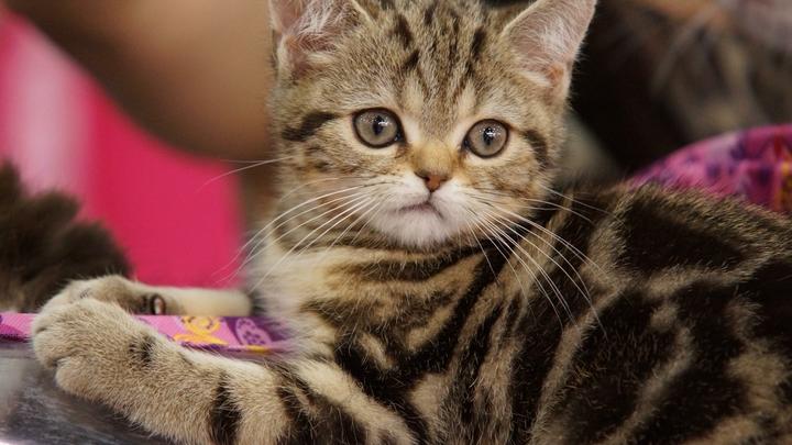 В Екатеринбурге внезапно вырос спрос на кошек: названы самые популярные породы