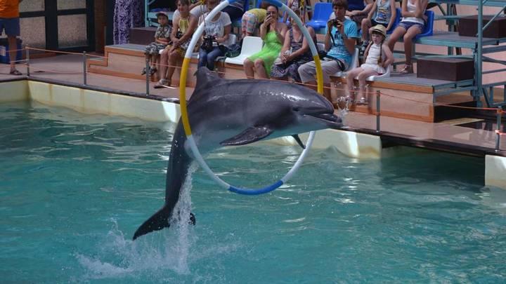 В Ростове-на-Дону прокуратура выявила нарушения в работе городского дельфинария