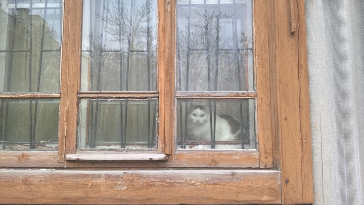 В Челябинской области женщину накажут за кошек в однокомнатной квартире