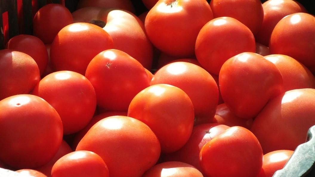 Ткачев: Россия избавится от дефицита томатов уже к 2022 году