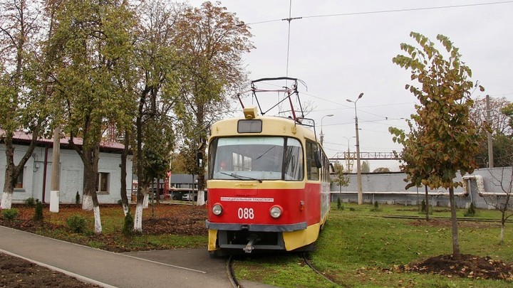 В Западное трамвайное депо Краснодара с улицы Московской пересадили 64 липы
