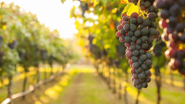 Российское вино: Как правильно выбрать и не разочароваться
