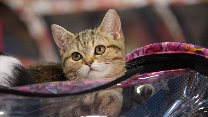 Что за комочек переваливается?: Маленький котёнок стал звездой интернета из-за нелепой походки