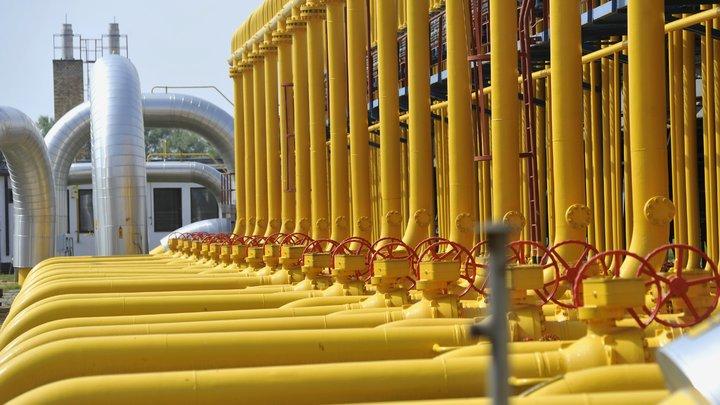 До хитрых хохлов стало что-то доходить: Стешин оценил реакцию Киева на демонтаж газопровода