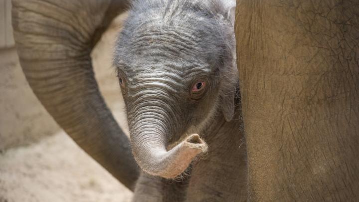 Палеонтологи не смогли выкопать зуб древнего слона в Прикамье