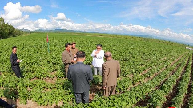Лидер КНДР Ким Чен Ын проигнорировал визит главы Госдепа ради картошки