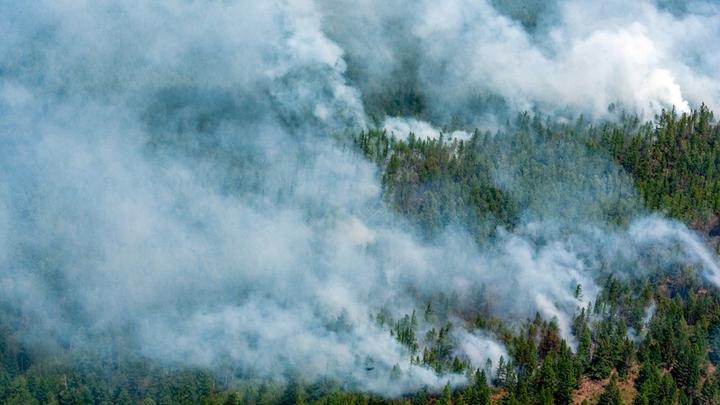 Одни тушат, другие пиарятся: Как ведётся борьба за русский лес