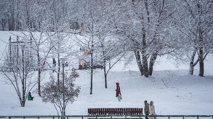 Повторение вишнёвой зимы? Вильфанд дал прогноз на сезон