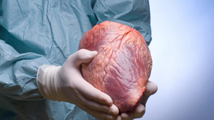 Клетки сердца способны к самоорганизации для преодоления повреждений - учёные