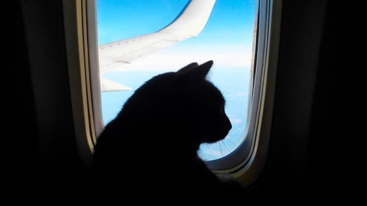 Пилоты сбежали, стюардессы подрались, пассажиров подморозили: Чем удивляют на борту самолетов