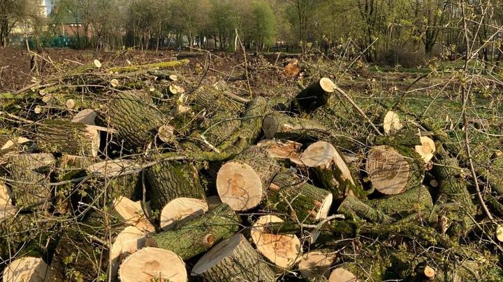 Во Владимире ради Сквера Победы вырубили 30 деревьев