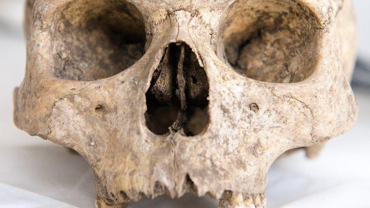 Смерть от голода и чумы - в Европе раскопали крупнейшее захоронение Средневековья