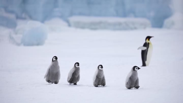 Це сало!: В Сети нашли объяснение странному природному явлению в украинской Антарктике