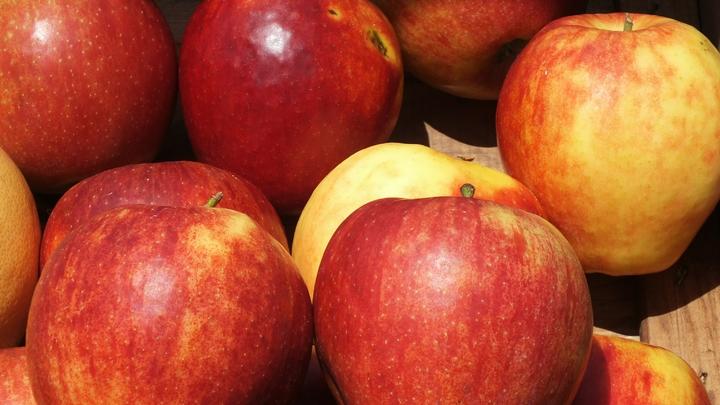 В Россию из Белоруссии пытались провезти контрабандные яблоки, замаскировав их под картошку
