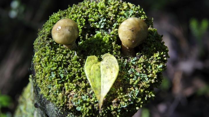 Названы самые опасные грибы Новосибирской области