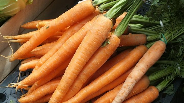 Во Владимирской области из-за засухи не будет морковки, капусты и кабачков