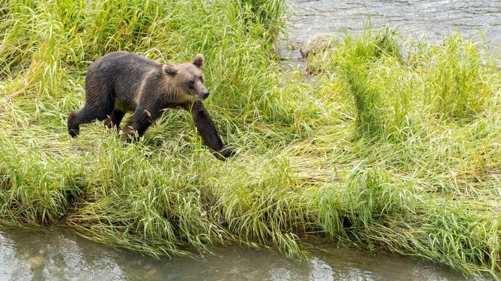 Типичные пляжи в России: В Урюпинске медвежонок с людьми устроил водную баталию - видео