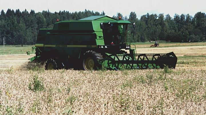 Минсельхоз Кузбасса объяснил ситуацию с неубранной в полях пшеницей