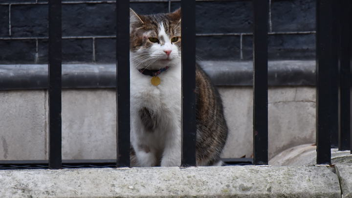 Метафора Brexit: Кот премьер-министра Великобритании подрался с коллегой из МИД