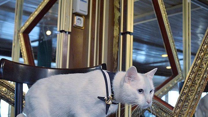 Кошачья самоизоляция: Эрмитаж показал, как живут пушистые стражи во время карантина