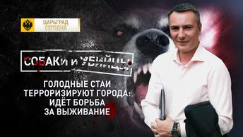 Собаки и убийцы. Голодные стаи терроризируют города: идёт борьба за выживание