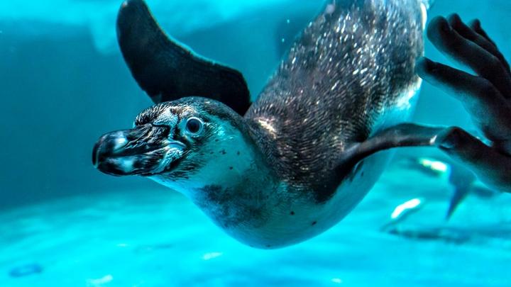 Дроздов рассказал, что среди пингвинов на отколовшемся айсберге нет дураков
