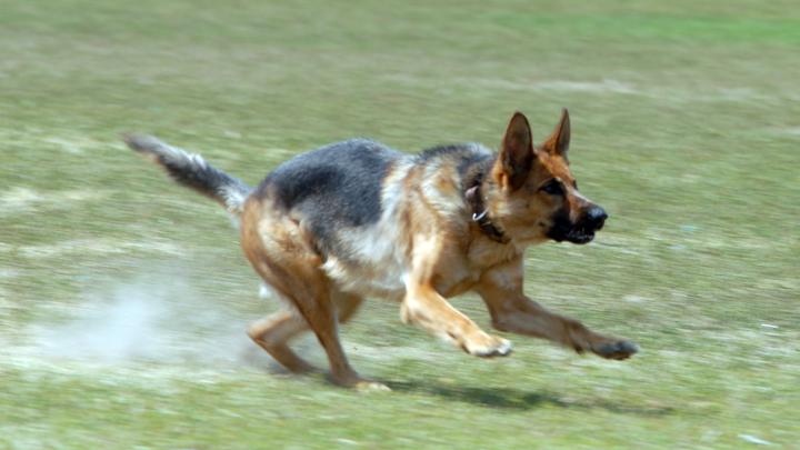 Завести собаку станет сложнее? В МВД рассмотрят введение строгого правила для будущих хозяев
