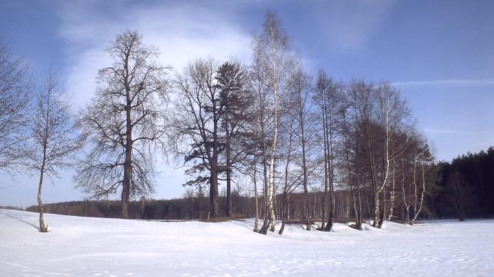 Какую погоду ждать новосибирцам в конце января