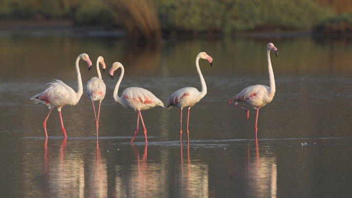В турецкой житнице погибли тысячи фламинго