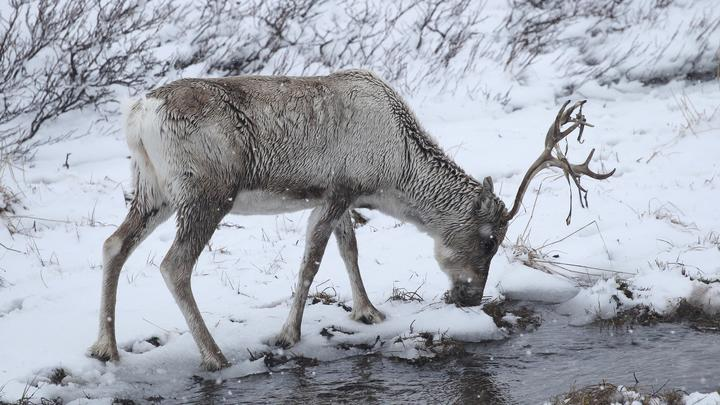 Арктический Чернобыль? Это огромная катастрофа, все специалисты потрясены