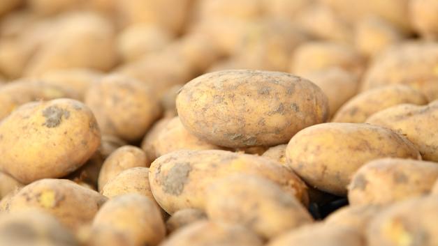 Сажайте смело, и вас не посадят: Россельхознадзор разрешил посадку овощей для личных нужд