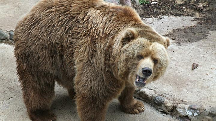 Можно сделать прогноз погоды: в зоопарке Челябинска проснулся медведь