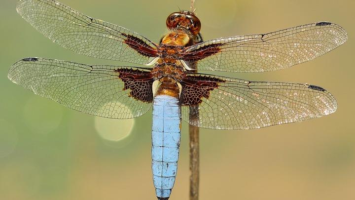 Американские биоинженеры разработали технологию превращения насекомых в киборгов