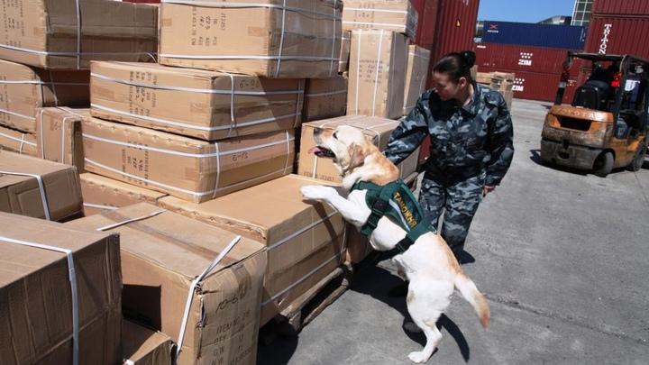Рекордное число подделок из Китая за день перехватила таможня в Новосибирске