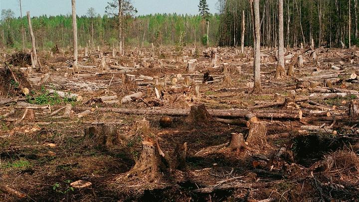 Русский лес увозили грузовиками: Контрабандисты пытались переправить в Азию древесину на 600 млн рублей