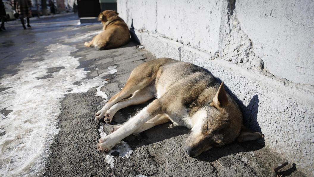 Ничего человеческого: Нападение наприют для животных погубило едва выхоженных собак