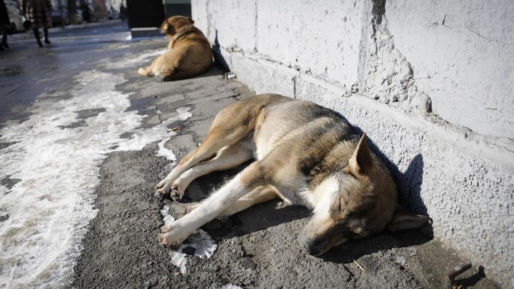 Ничего человеческого: Нападение на приют для животных погубило с трудом выхоженных собак