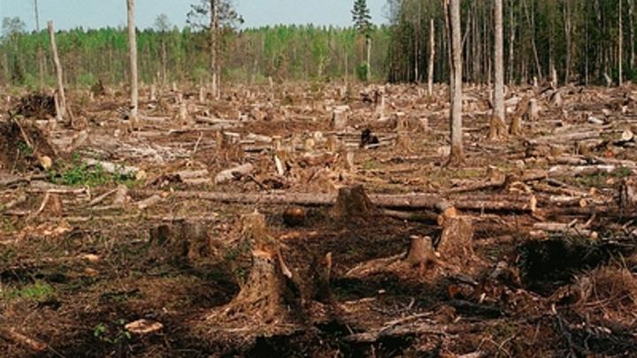 Разбазарили леса на 2 млрд рублей: Стали известны подробности дела преемника Васильевой