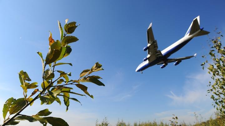 Самолет Екатеринбург — Сочи прервал взлет из-за сигнала о столкновении