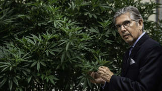 С марихуаны на героин магазин семян конопляных