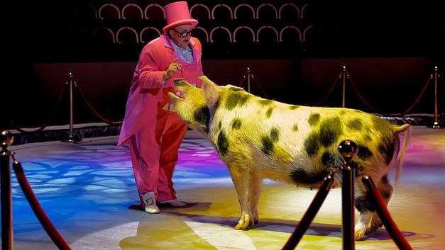 Цирк высоких технологий: Дрессировщик Маск сделает из нас свиней