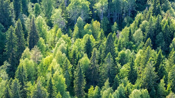 Наша позиция неизменна: Мишустин назвал особенность законопроекта по восстановлению лесов