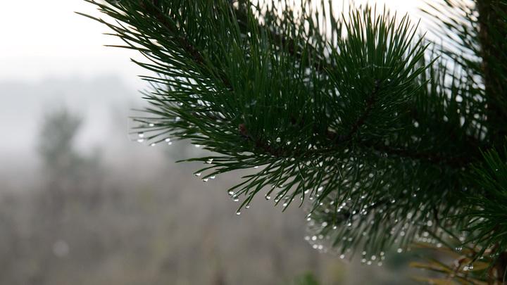В некоторых районах Кубани ближе к выходным ожидается дождь