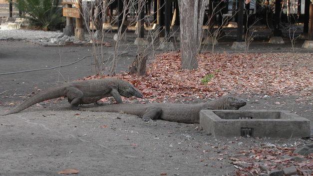 Где находится национальный парк Комодо. Или фото реальных драконов, от которых захватывает дух