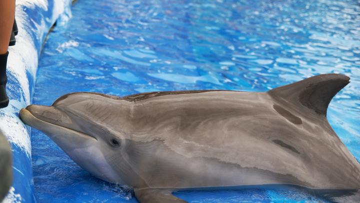 Американцы показали армию дельфинов КНДР