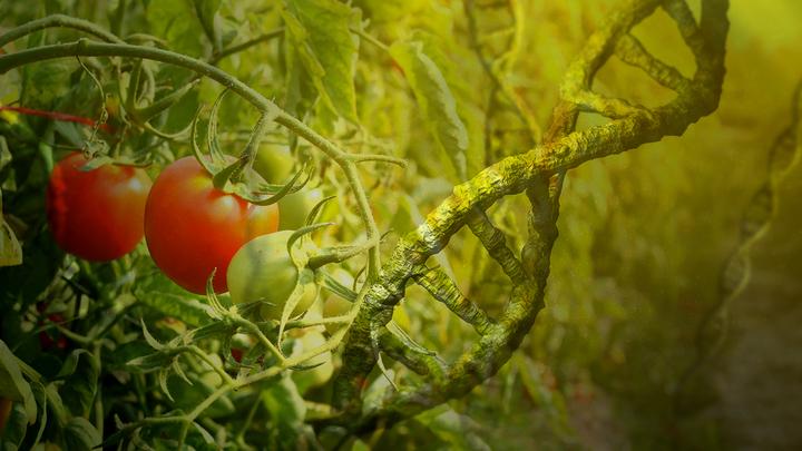 Монсанто: Героин, ГМО и вмешательство в политику