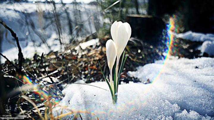 Нормальная весна придет в Москву в воскресенье - синоптики