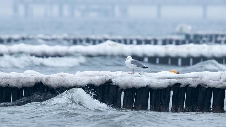 Следующее в Петербург панамское судно терпит бедствие во льдах Финского залива